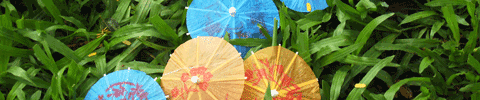 umbrellas in grass